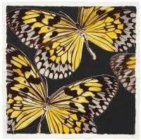 Monarchs, Jan 24