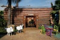Noah's Ark, Scenes from Jesusland