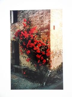 Tuscany, Roses Taverna d'Arbia, 1991