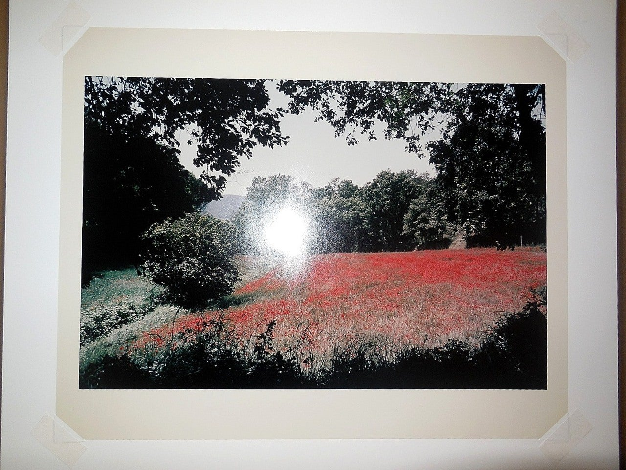 Tuscany, Field of Poppies, 1996 Large Vintage Color Photograph C Print Signed For Sale 2