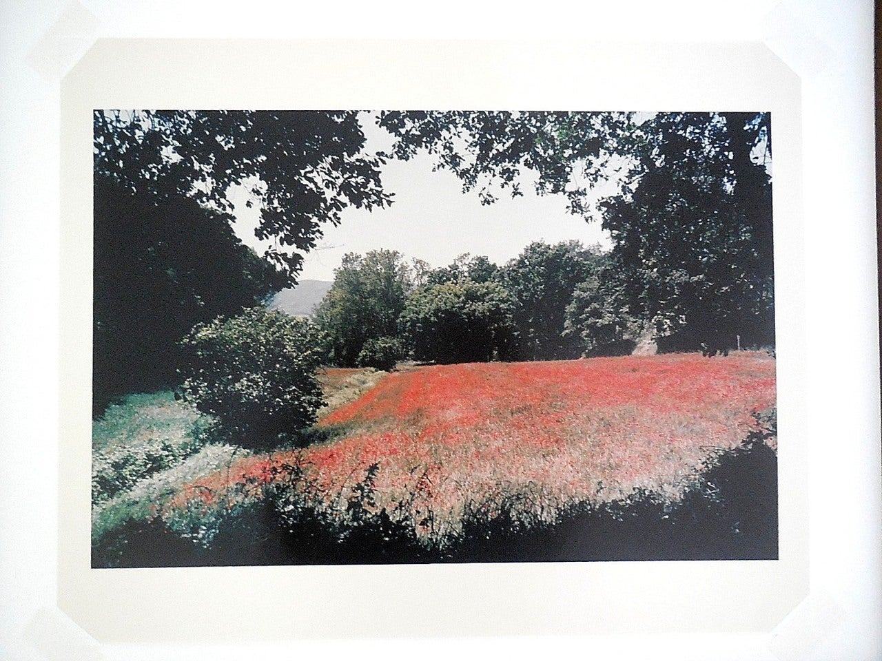 Tuscany, Field of Poppies, 1996 Large Vintage Color Photograph C Print Signed For Sale 3