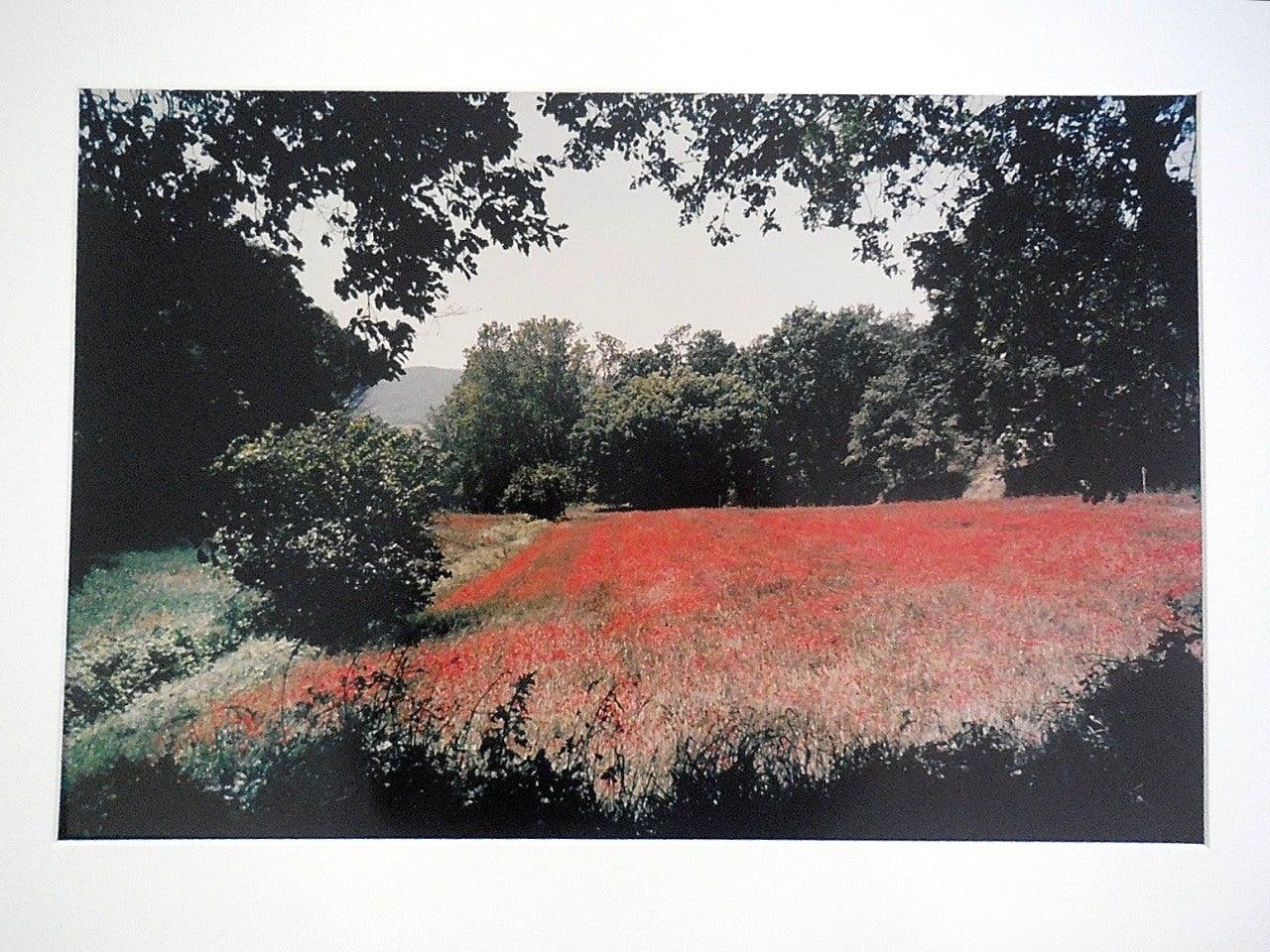 Joel Meyerowitz Landscape Photograph - Tuscany, Field of Poppies, 1996 Large Vintage Color Photograph C Print Signed