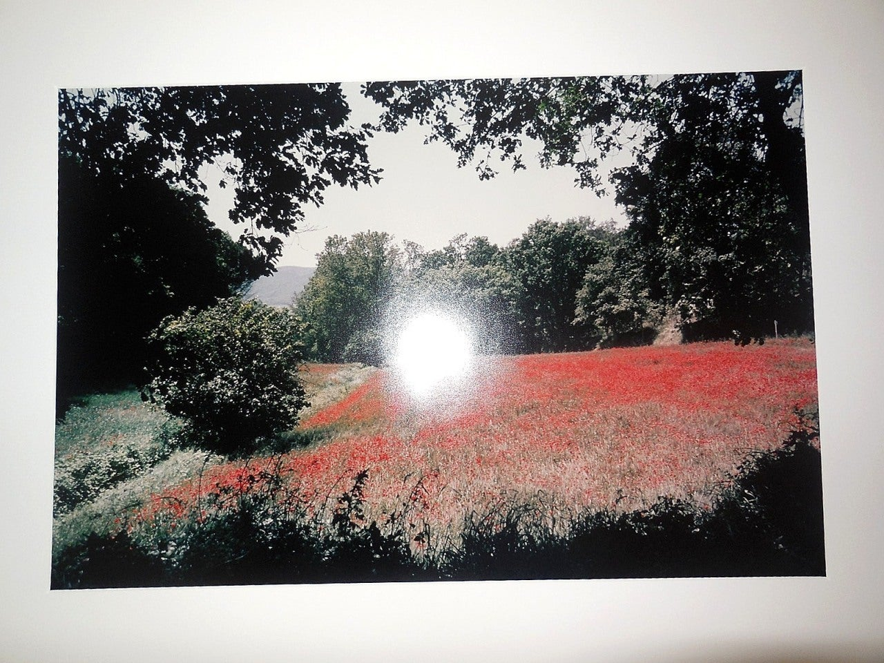 Tuscany, Field of Poppies, 1996 Large Vintage Color Photograph C Print Signed - Beige Landscape Photograph by Joel Meyerowitz