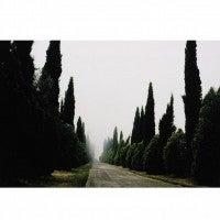 Tuscany, Castello, 1996