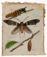 Microlepidoptera