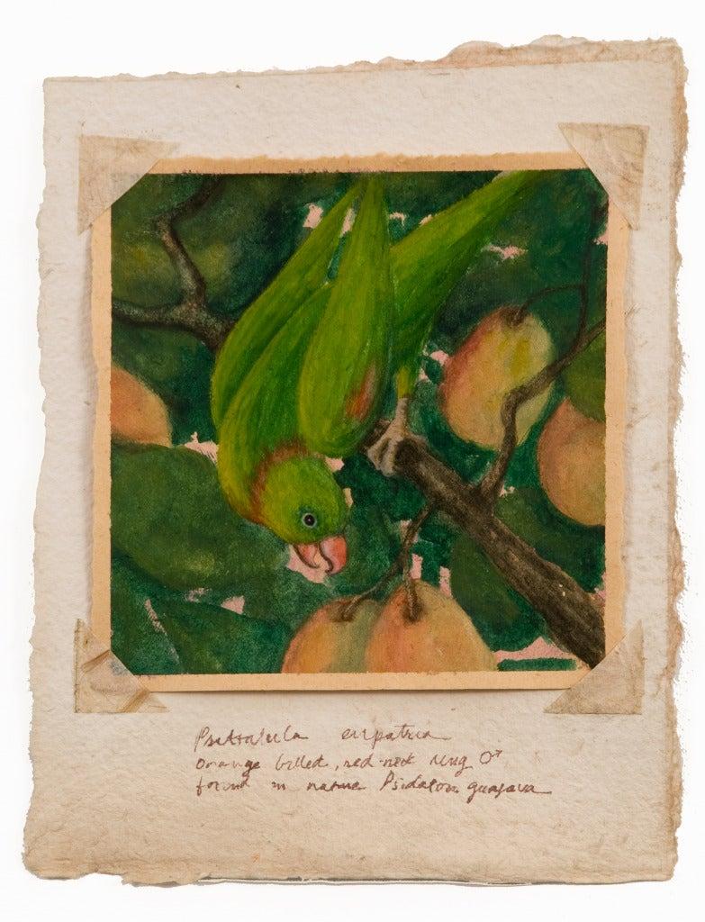 Green Parrot - Art by Ruth Bauer
