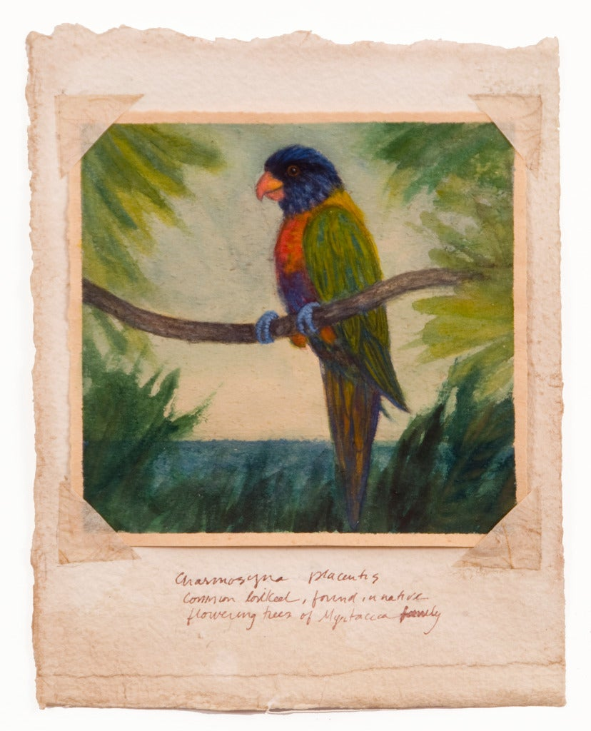 Common Lorikeet - Art by Ruth Bauer