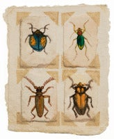 Beetles #2