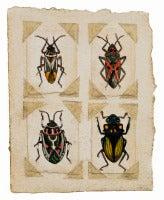 Beetles #3