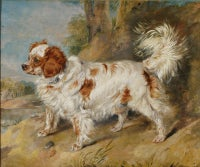 Mr Plumber's Dog by Sir Edwin Henry Landseer RA