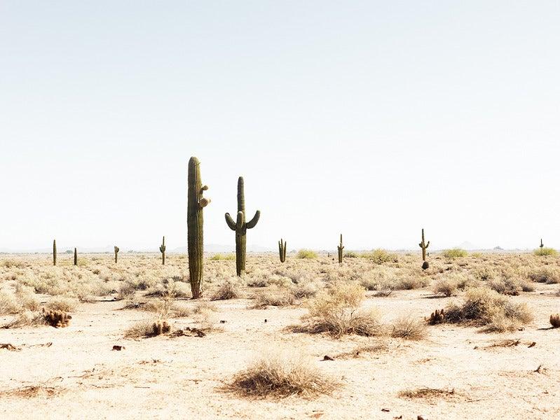 Desert Tucson Arizona Photograph at 1stdibs
