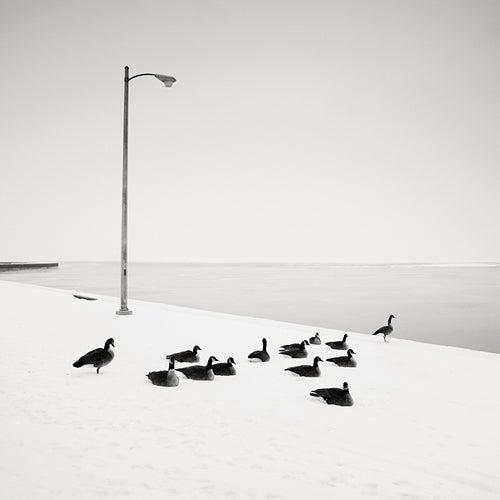Josef hoflehner gray geese chicago illinois usa for Hoflehner interiors