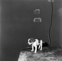 Puppy on Table, 2000