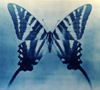 Butterfly 2, 4/12