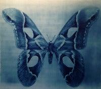 Butterfly 3, 1/12