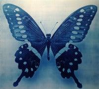 Butterfly 1, 4/12