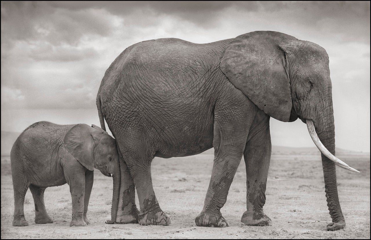 Nick Brandt Elephant Mother With Baby At Leg Amboseli