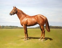 Ruben, Chestnut Colt