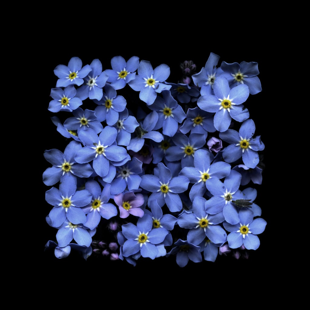 Paul Kenny - FORGET-ME-NOT SUMMER, 2011 1