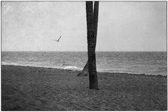 Daytona Beach, Florida, 1975 - Elliott Erwitt (Black and White Photography)
