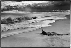 East Hampton, New York, 1998 - Black and White Photography
