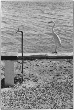 Florida Keys, 1968 - Elliott Erwitt (Black and White Photography)
