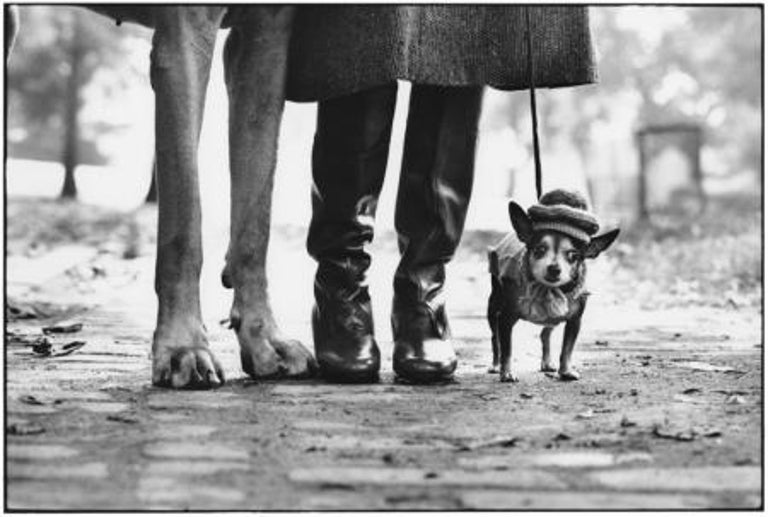 New York City, 1974 - Elliott Erwitt (Black and White Photography) Signed, inscribed with title and dated on accompanying artist's label Silver gelatin print, printed later  Available in four sizes: 11 x 14 inches 16 x 20 inches 20 x 24 inches 30 x