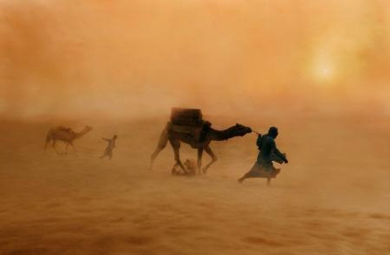 Camels in Dust Storm, India, 2010  - Photograph by Steve McCurry