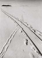 Adelie Penguin Tracks and Sledge Track Crossing, 8 December 1911