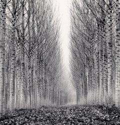 Corridor of Leaves, Guastalla, Emilia Romagna, Italy, 2006  - Michael Kenna