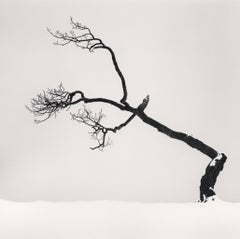Kussharo Lake Tree, Study no 6, Kotan, Hokkaido, Japan, 2007  - Michael Kenna