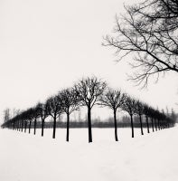 Perspective of Trees, Tsarskoe Selo, Russia, 1999