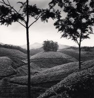 Tea Estates, Study 1, Kerala, India, 2008