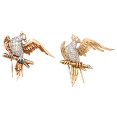 Magnificent Bird Clips