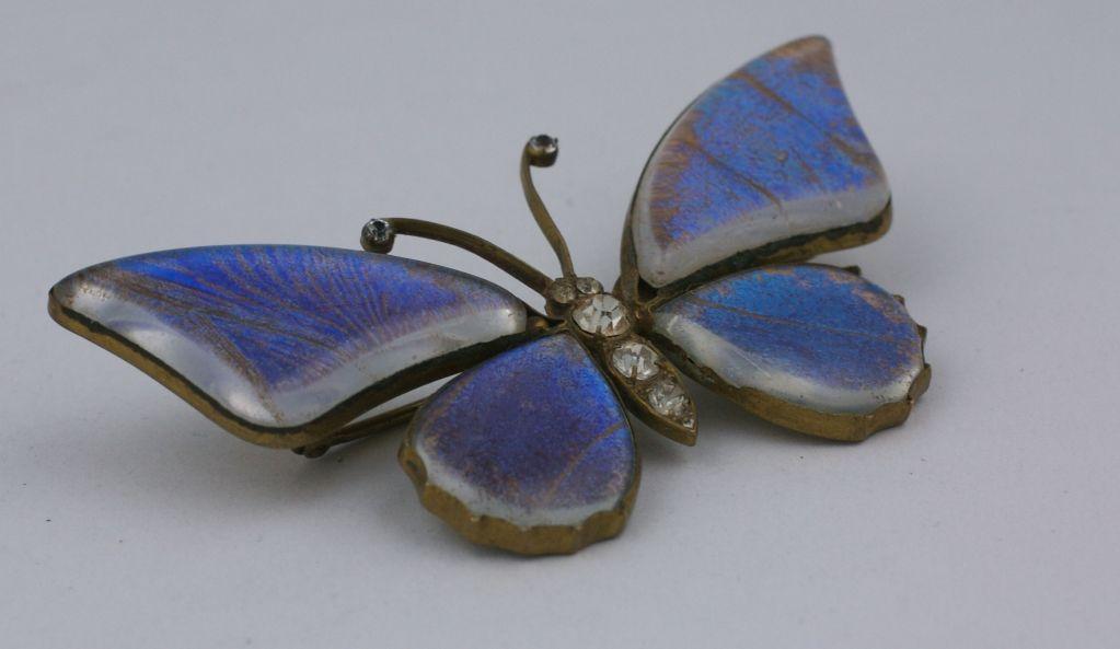 Victorian Butterfly Wing Brooch 3