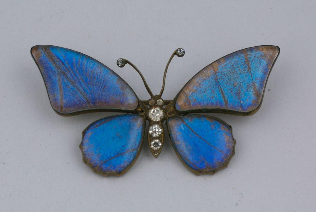 Victorian Butterfly Wing Brooch 4