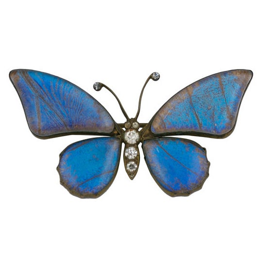 Victorian Butterfly Wing Brooch 1