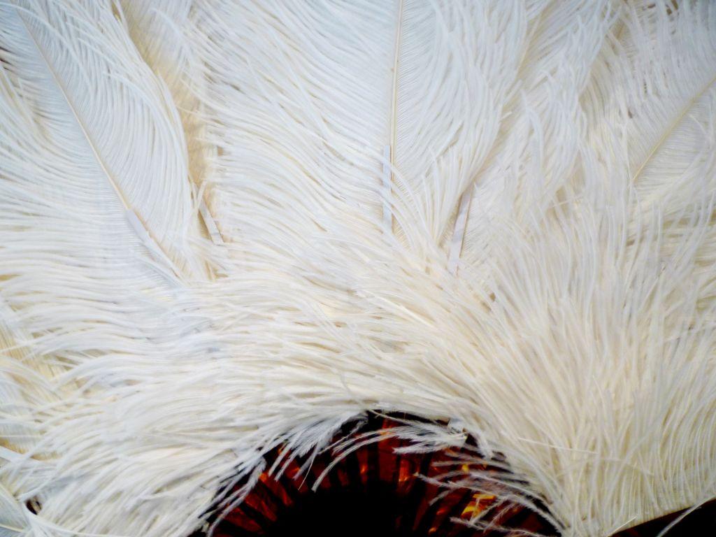1920s Ostrich Feather Fan 3