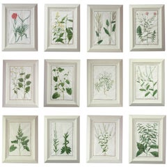 Set of 12 English 18th Century Botanical Studies