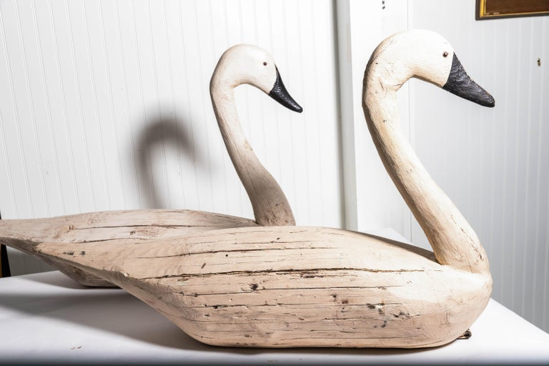 Pair of monumental swan decoys carved wood with glass eyes, leather toggle attachment for weight and small weight in bottoms. Signed on male F&S. Measures: Female 40.5 inch long 27 inches high 10 inches wide.