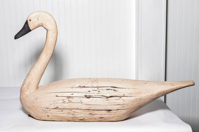 19th Century Pair of Monumental Swan Decoy's Early 1900s For Sale