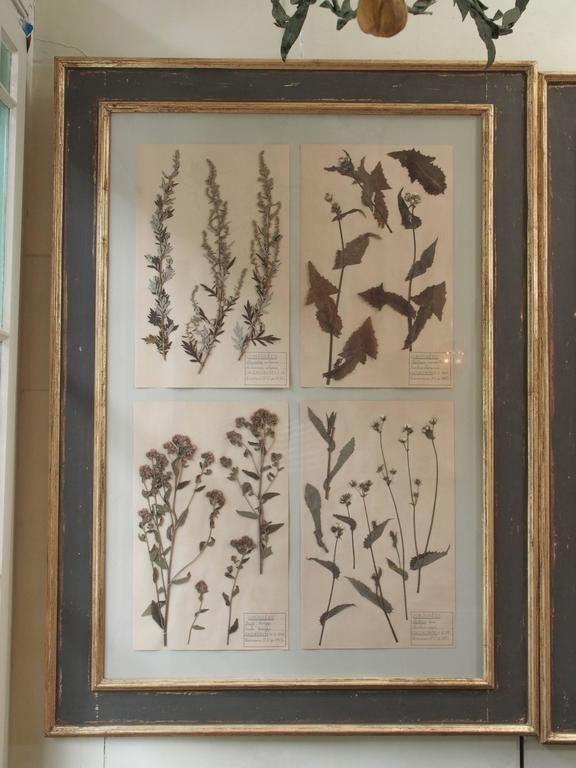 Two framed French botanicals, each showcasing four species. The frames are painted and gilded with light wear in accordance with their age. Would have been popular during the Age of Enlightenment.