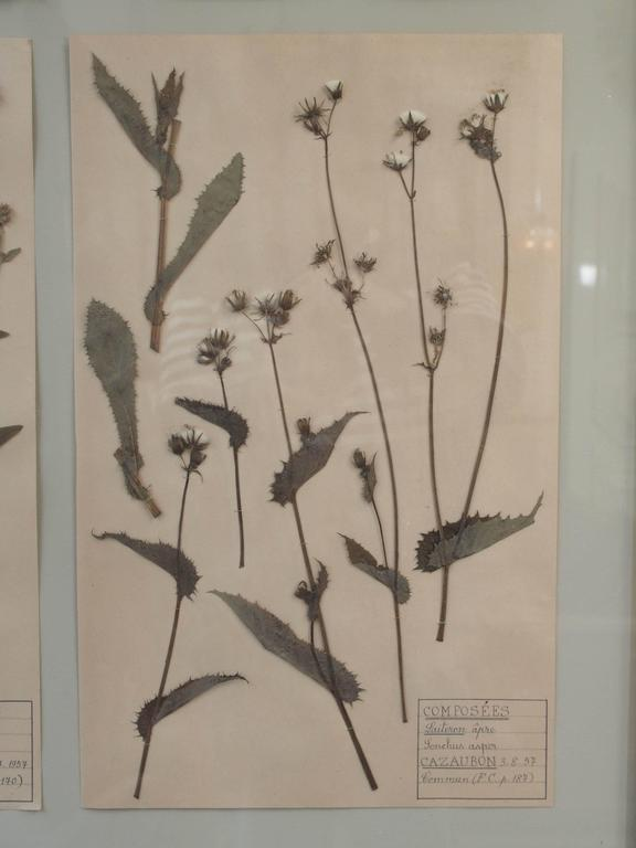 Pair of 19th Century French Framed Botanicals For Sale 1
