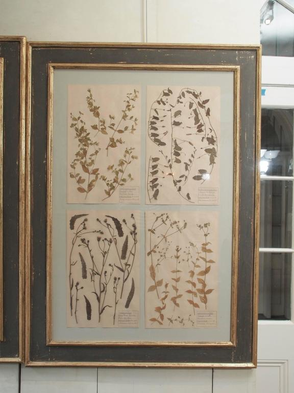 Pair of 19th Century French Framed Botanicals For Sale 2