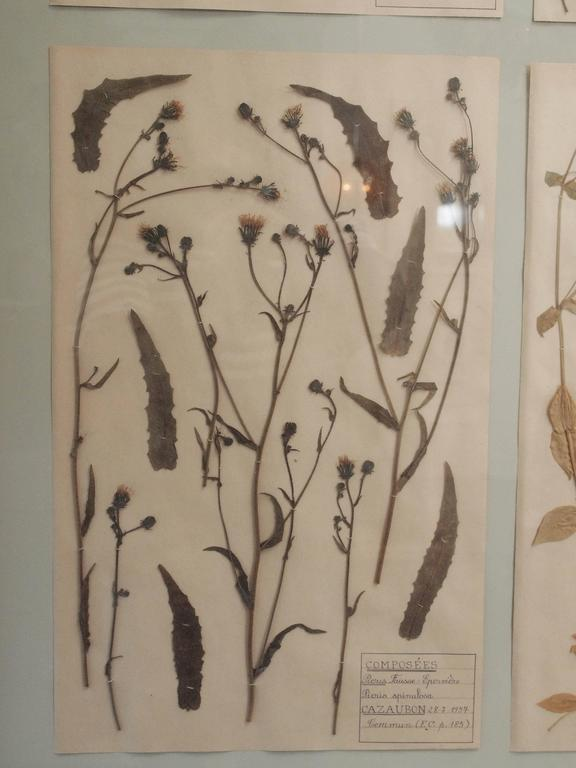 Pair of 19th Century French Framed Botanicals For Sale 5