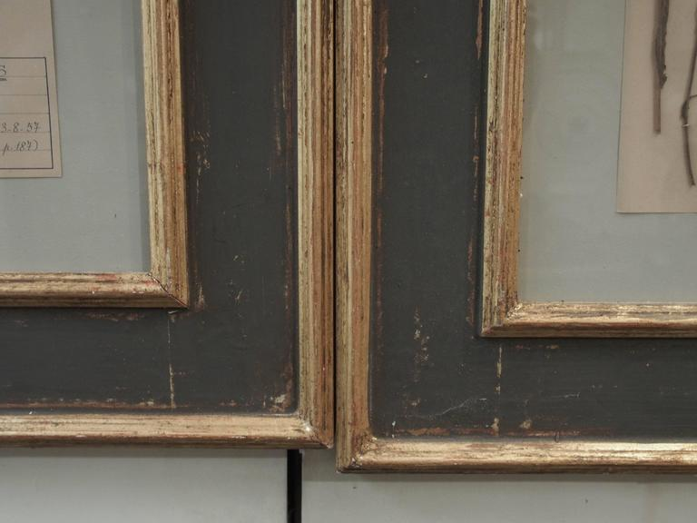Pair of 19th Century French Framed Botanicals For Sale 6