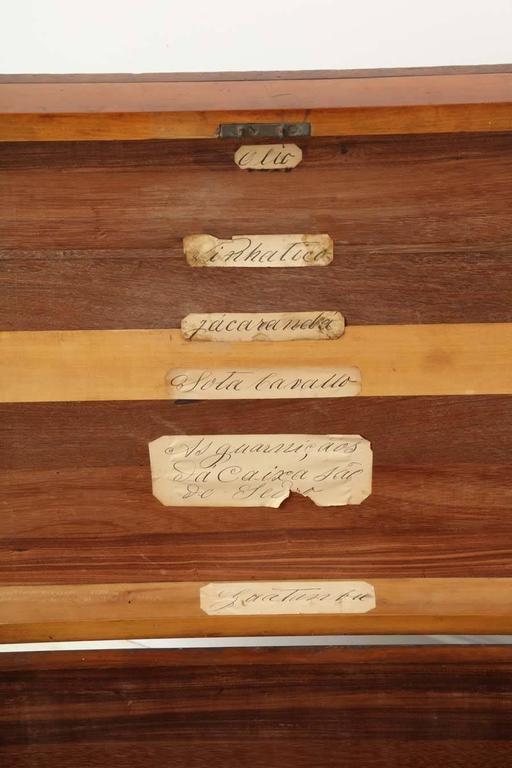 19th Century Portuguese Specimen Wood Travelling Chest 7