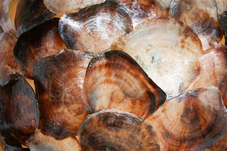 Shell Hanging Lantern 8