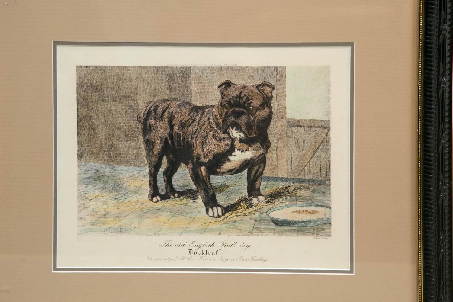 Collection Of Various Bulldog Artworks For Sale At 1stdibs