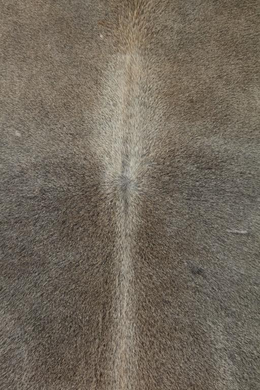This contemporary gray Brazilian cowhide rug is made of 100% natural materials. Their tanneries are ISO-9001 certified for quality and ISO 14001 certified for low environmental impact which is what gives them their gold star rating from Leather